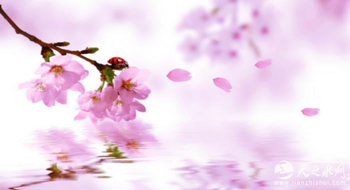 桃花没有树枝的简笔画