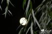 武会春:幽思风雨夜
