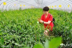 天水秦州区文联走进现代农业科技示范园区(图)