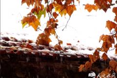 天水今冬第一场雪刷屏了,最美的原来在这里...