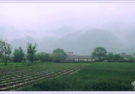 赵安生:烟雨李子园(组图)