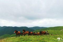 扬鞭策马!迎风奔驰在盛夏的古坡草原~让你的暑期清凉一夏!(天之水网组图)